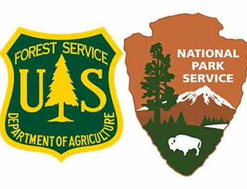 What is the difference between Sequoia National Forest and Sequoia National Park?